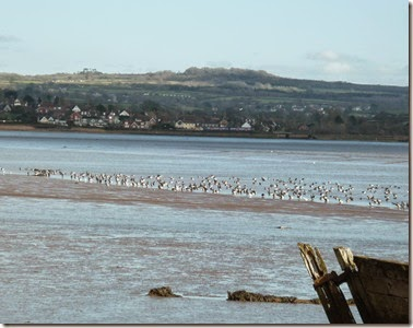 lympstone and birds