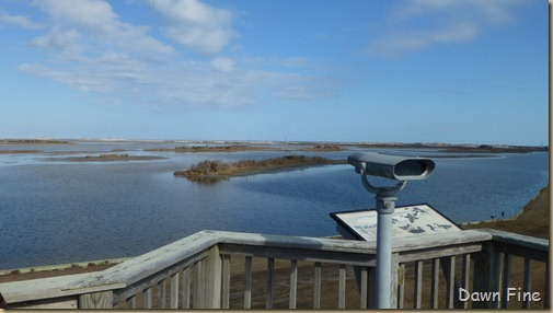 Pea Island NWR_065