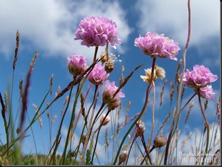 blom_20120619_trift