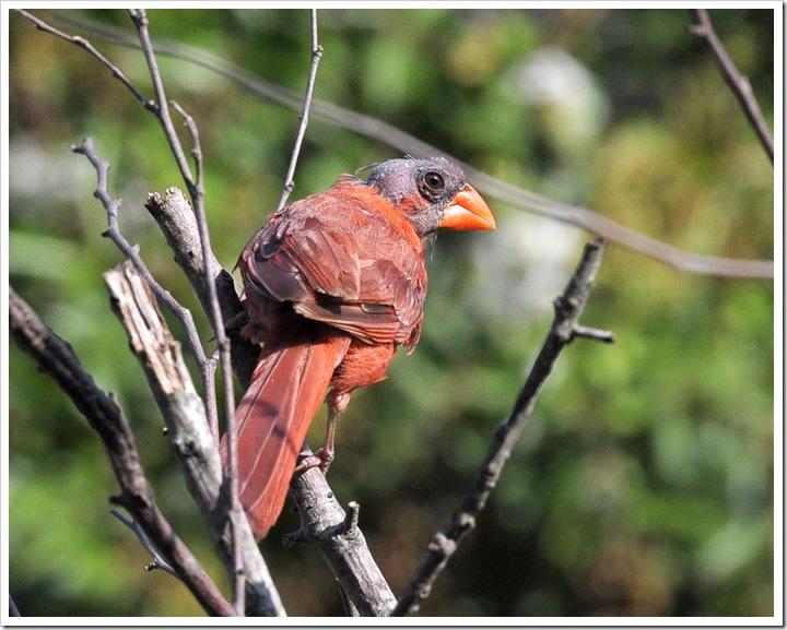 birds 026