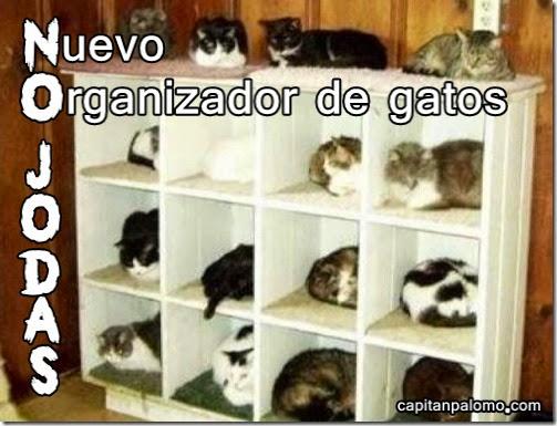 organizador de gatos imagenes divertidas de gatos