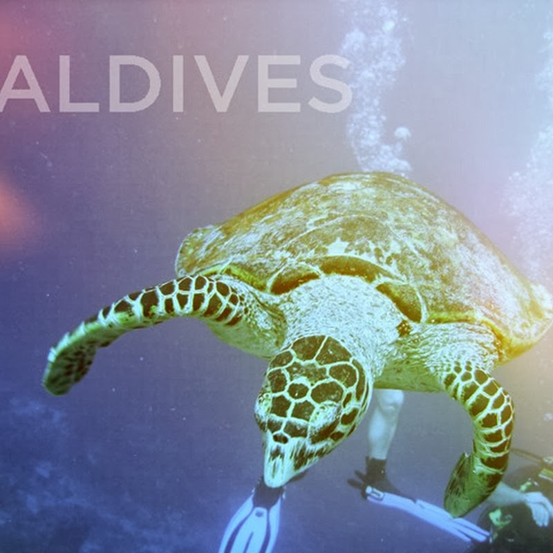 Diving And Snorkelling In The Exotic Maldives