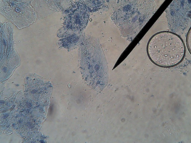 Miller And Levine Biology Worksheets – Biology Corner Worksheets