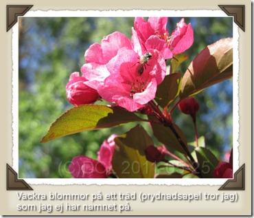 prydnadsapel_blomma