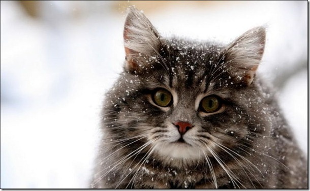 cats-play-snow-15