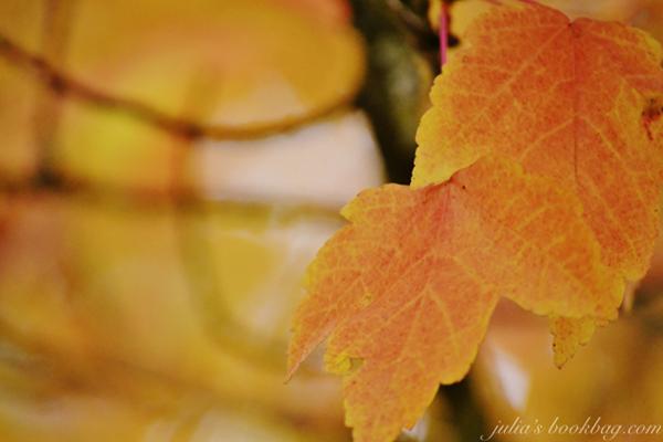Foliage5