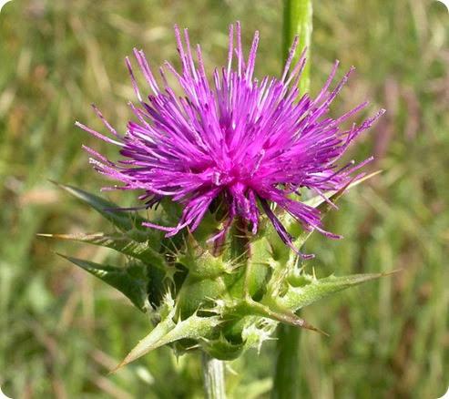 herbal antioxidan