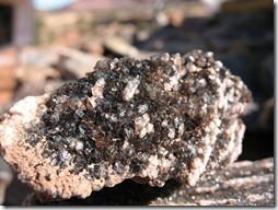 2012-04-15 Petrified Wood, Fry Canyon, UT (99)