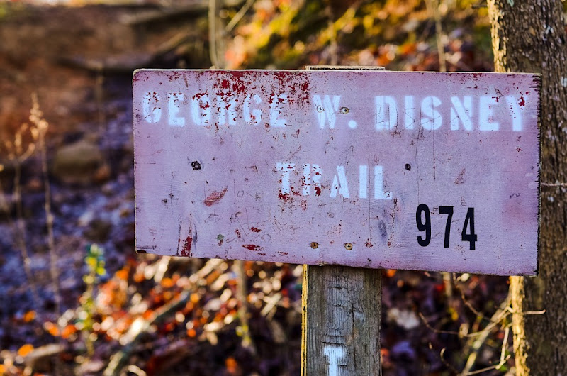 disney trail-5187
