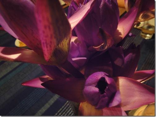 Ninfee viola, il fiore nazionale