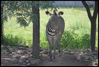 Zoo5 065