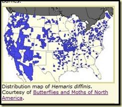 Hummingbird moth distribution