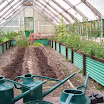 Two rows of potatoes to overwinter in the greenhouse