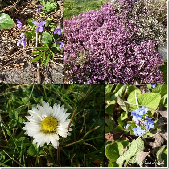 blomster i haven1