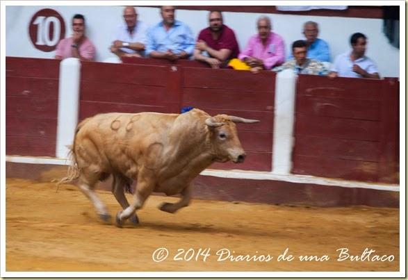 Toros 2014 (1)-38