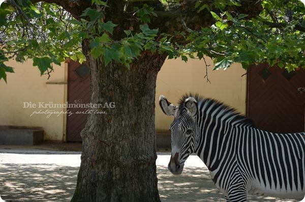 Zoo Frankfurt 100713 (80)
