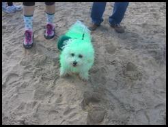 green-dog