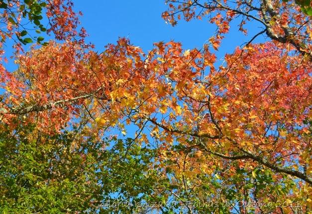 Glória Ishizaka - Outono 2013 - 60