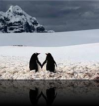 pinguins1