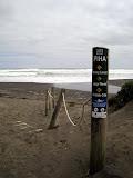 North Island - Piha Beach (the deadliest beach in NZ)