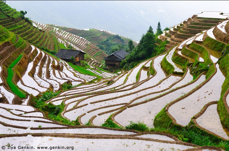 rice-terraces-1