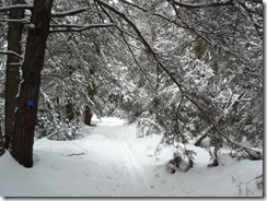 The 2nd set of trails I was on looked different - bigger trees and more rhodendron