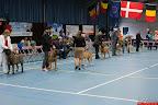 20130510-Bullmastiff-Worldcup-0397.jpg