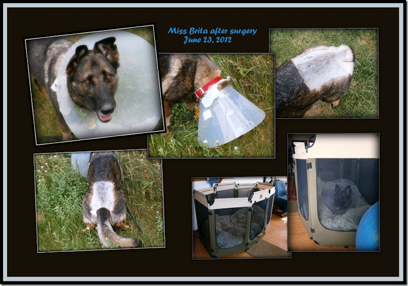 2012.6.23 Brita after surgery