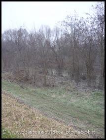 Passeggiata sull'argine dopo la piena - Padulle - 11 gennaio 2014 (26)