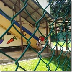 annschool