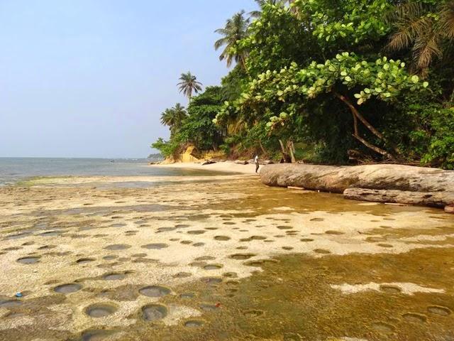 Forêt équatoriale (10)