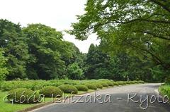 Glória Ishizaka -   Kyoto Botanical Garden 2012 - 95