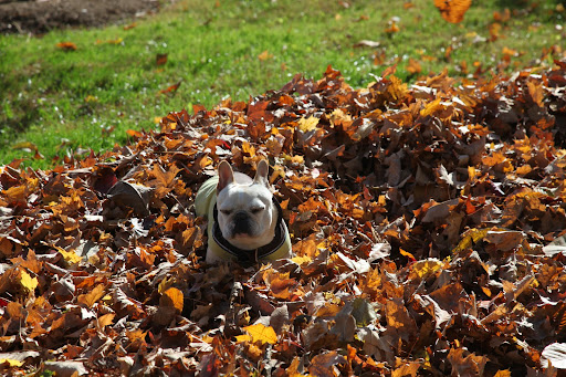 Ahh yes - now I get to bask in my soft sunny pile of leaves.