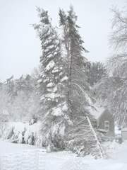 Blizzard 2.9.2013 taken from back door split spruce tree12
