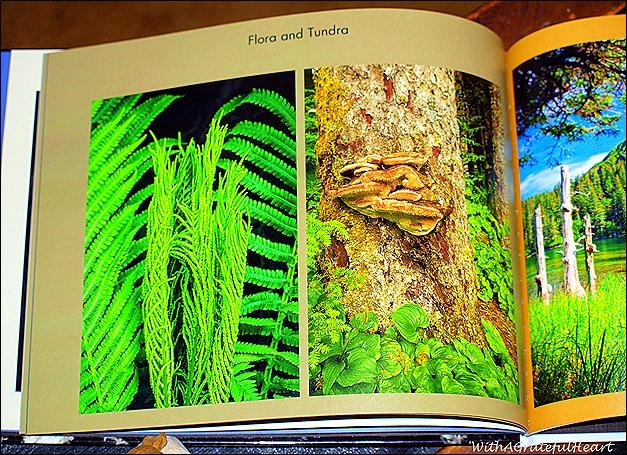 Alaska Book 5