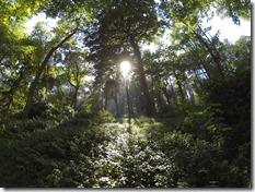 Le soleil arrive par endroit à se frayer un chemin parmis les feuilles des arbres...