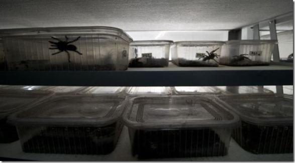 spider-farmer-juan-2