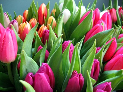 Spring Wedding flowers - tulips