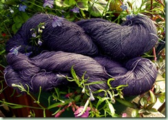 Logwood on silk