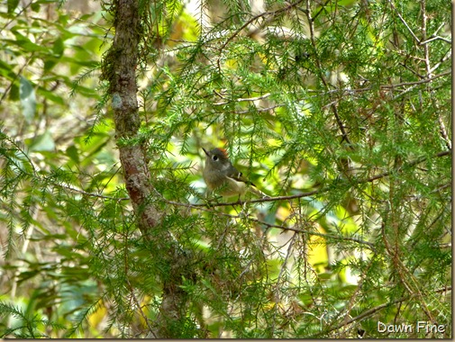 Beidler Forest_191