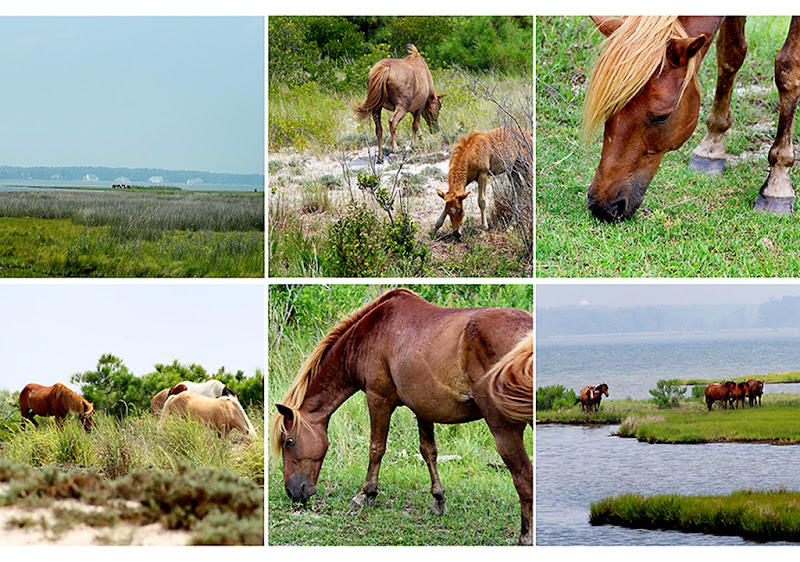 pony collage-web