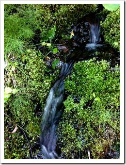 Små vattendrag letar sig fram under träden