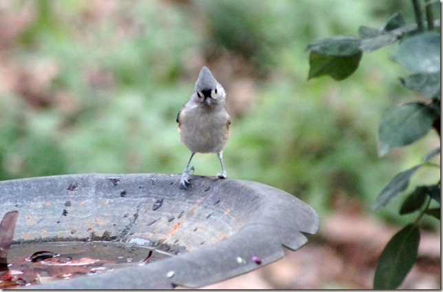 Google eyed Titmouse