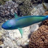 Big Fish and Little Fish - Noumea, New Caledonia