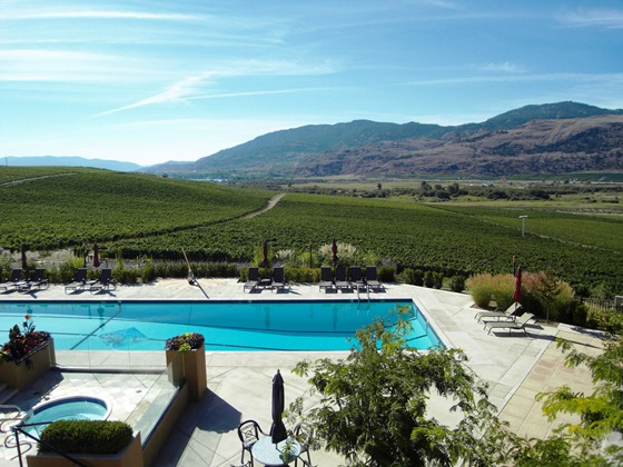 Burrowing Owl Vineyard View