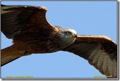 Nant yr Arian D7000  28-03-2012 14-44-003