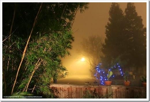 150123_fog_night2