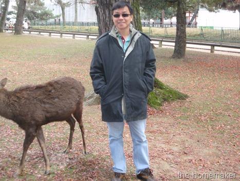 22 Sang in Nara Park