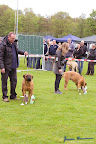 20100513-Bullmastiff-Clubmatch_31003.jpg