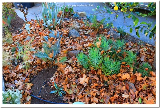 131122_home_leaves_10